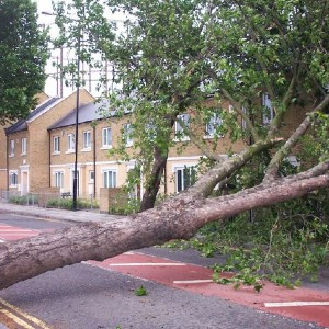 tree fallen across a road with townhouses in the background