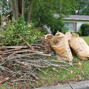 pile of sticks and brown bags set out for yard waste collection